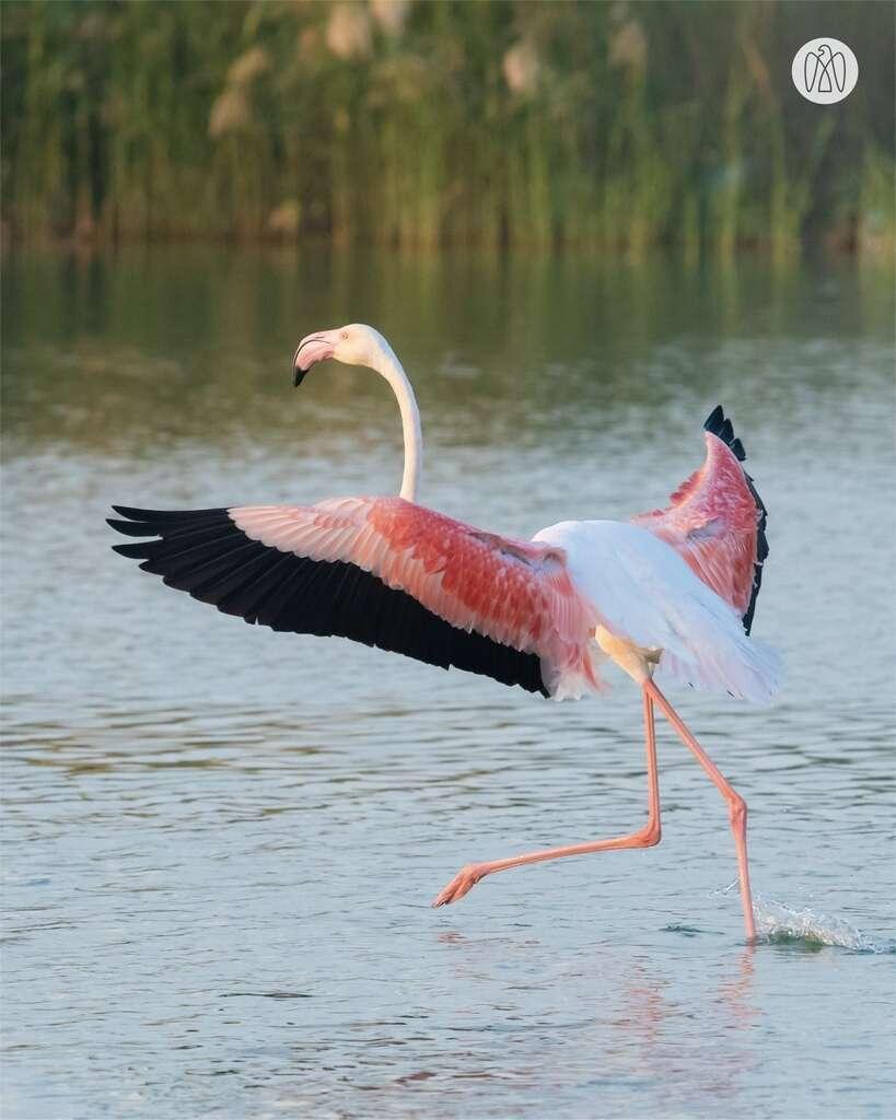 environment, abu dhabi, uae, biodiversity, birds, flamingos, turtle, coral, plants