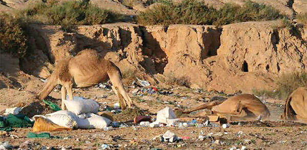 Of camels and plastic bags