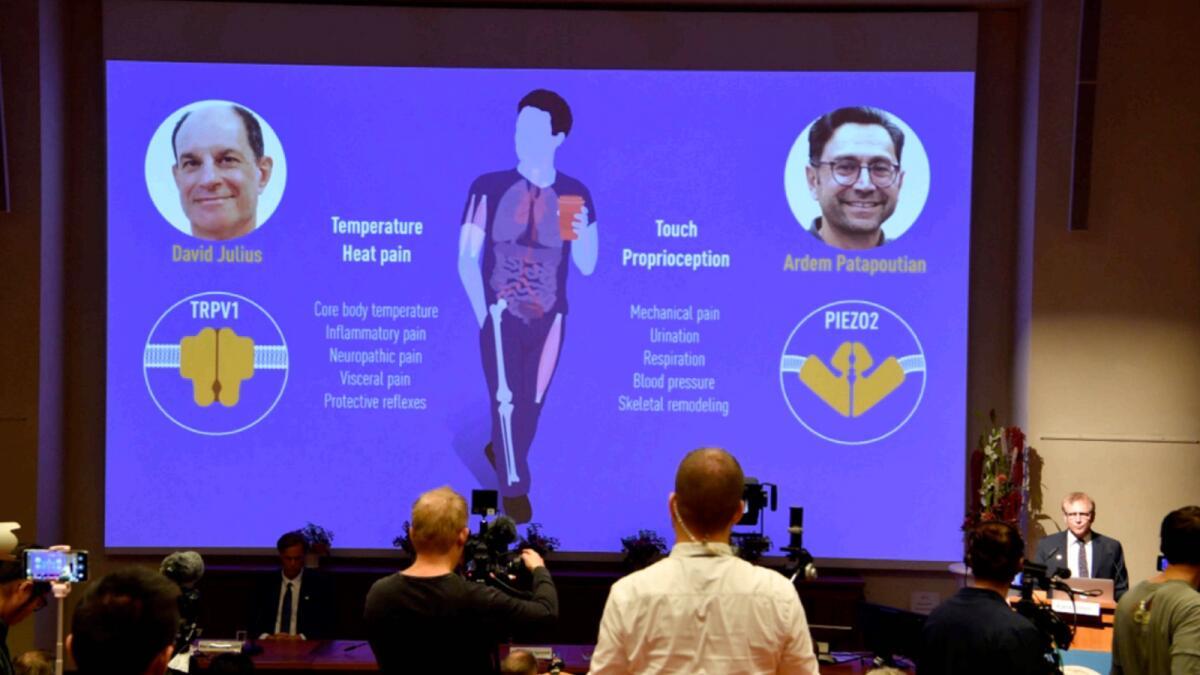 Nobel Committee member Patrik Ernfors explains the 2021 Nobel Prize in Physiology or Medicine during a press conference at the Karolinska Institute in Stockholm, Sweden. — AP