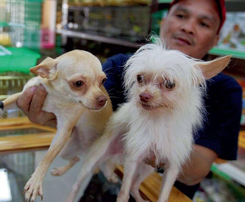 Strict licensing criteria for Dubai pet market vendors