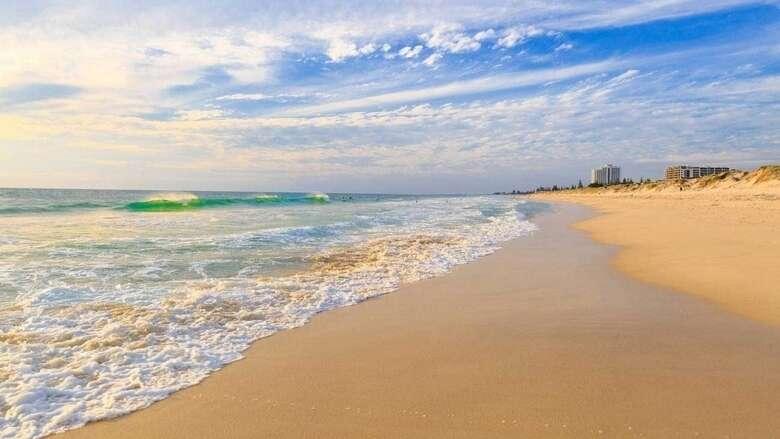 dead dogs, uae beaches, fujairah, poisoned dogs, poison, dog, dead,