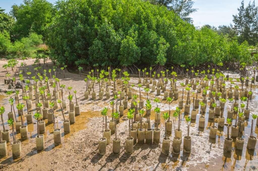 UAE Nation Brand, Nepal, Indonesia 10 million, trees, planted, UAE, brand votes,