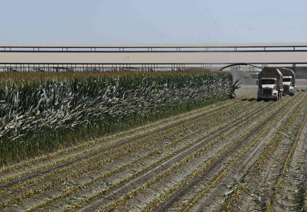 US farmers see another bleak year despite Phase 1 trade deal