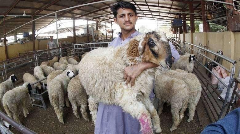 guide, Eid Al Adha, Eid sacrifice, across UAE