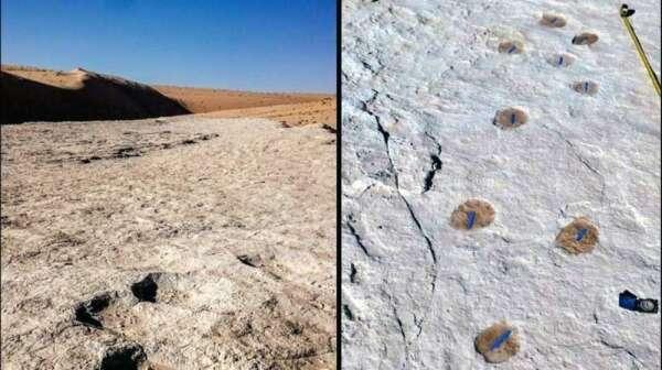 saudi arabia, human, animal, footprints, dating, back, 120,000, years, discovered