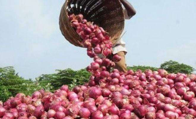 Indian onion export, Bangladesh, onion price