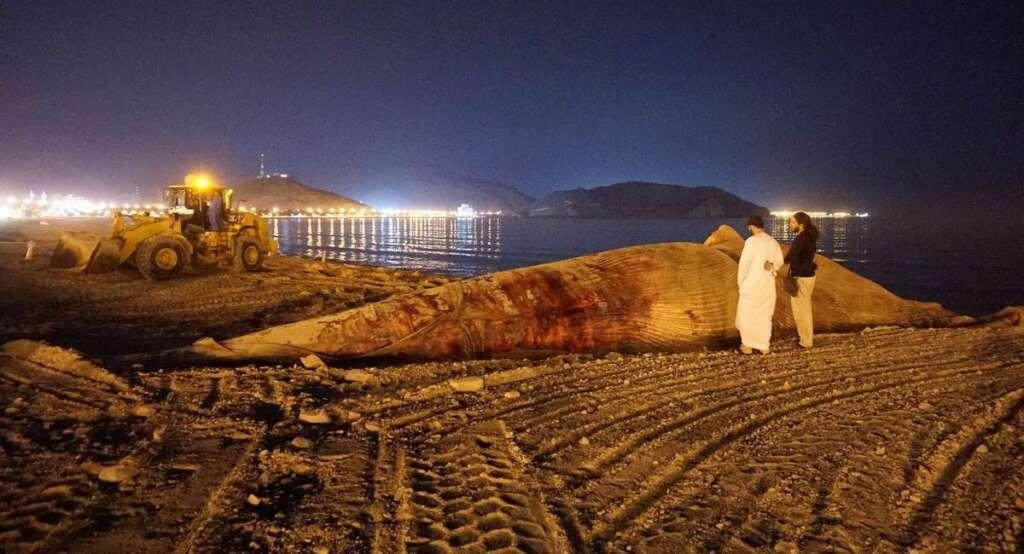 27-metre dead whale washes ashore on Khor Fakkan beach