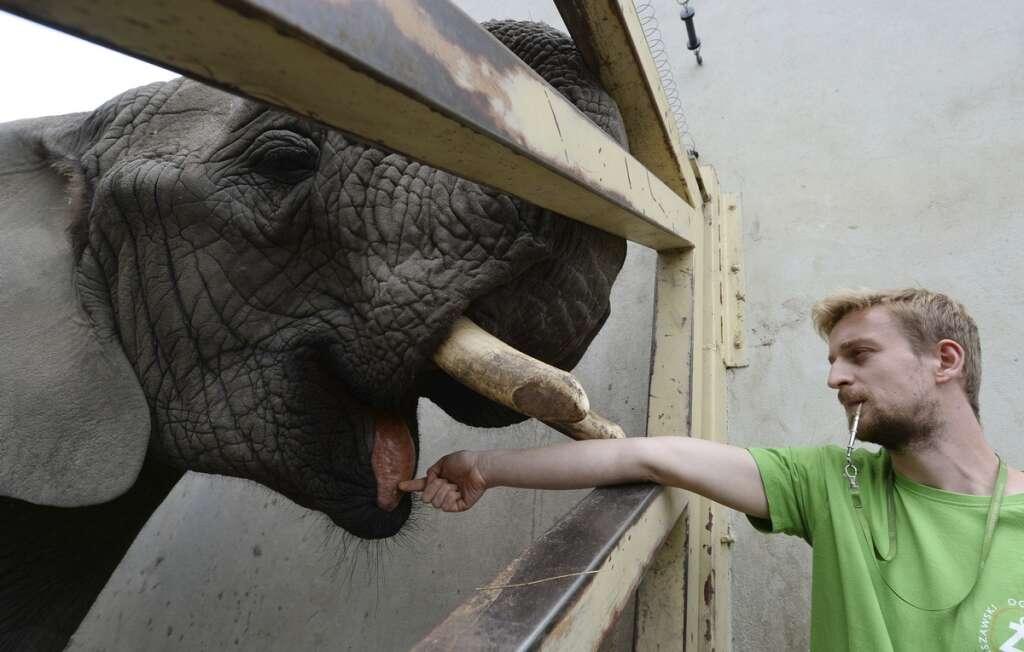 Warsaw zoo, hemp oil, three elephants