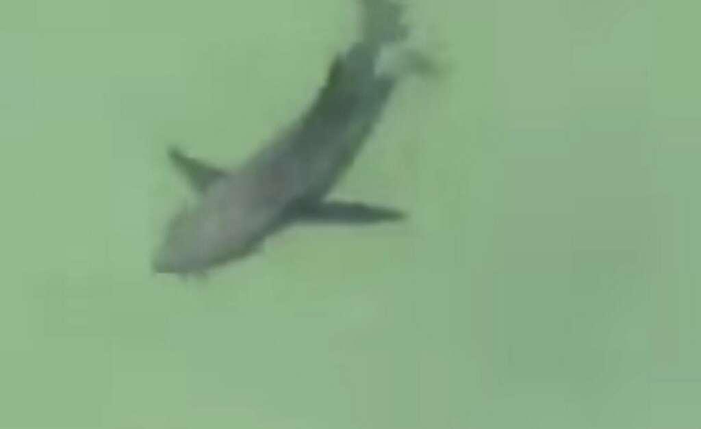 Sharks sighted off RAKs Ghalila beach