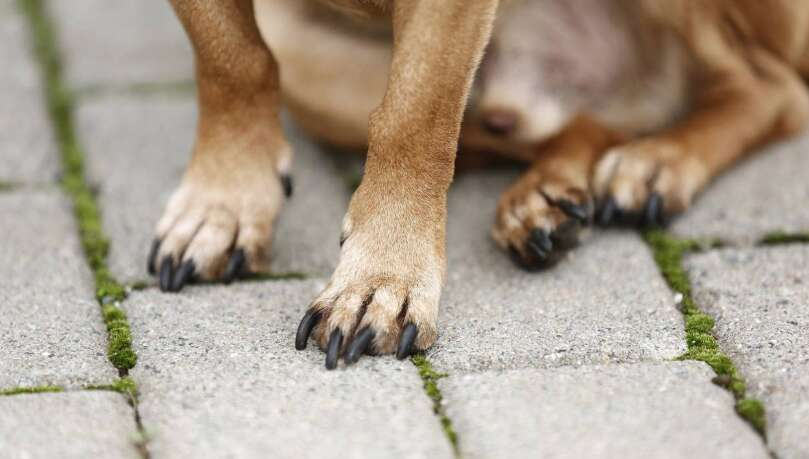 Man claims drug for dogs cured him of cancer - News