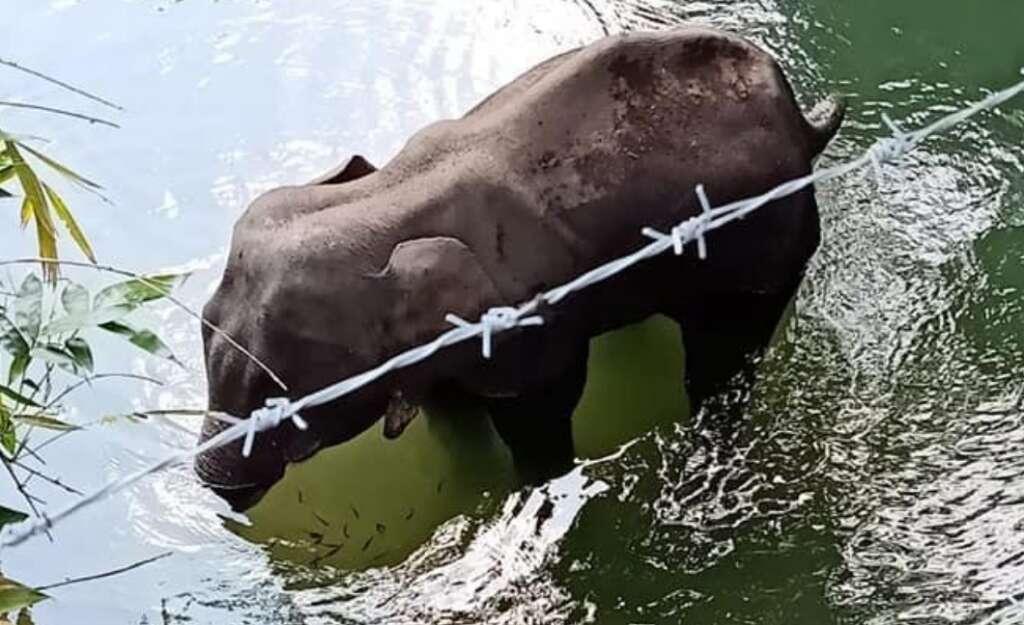 Kerala, pregnant elephant,  Silent Valley National Park