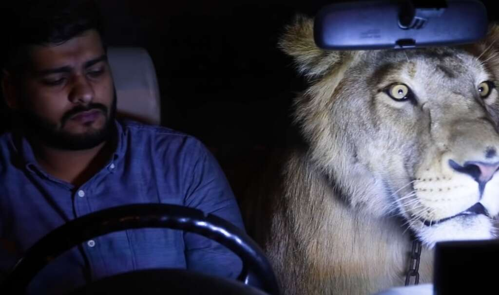 Video: What is a lion doing in Pakistani man's car? - News