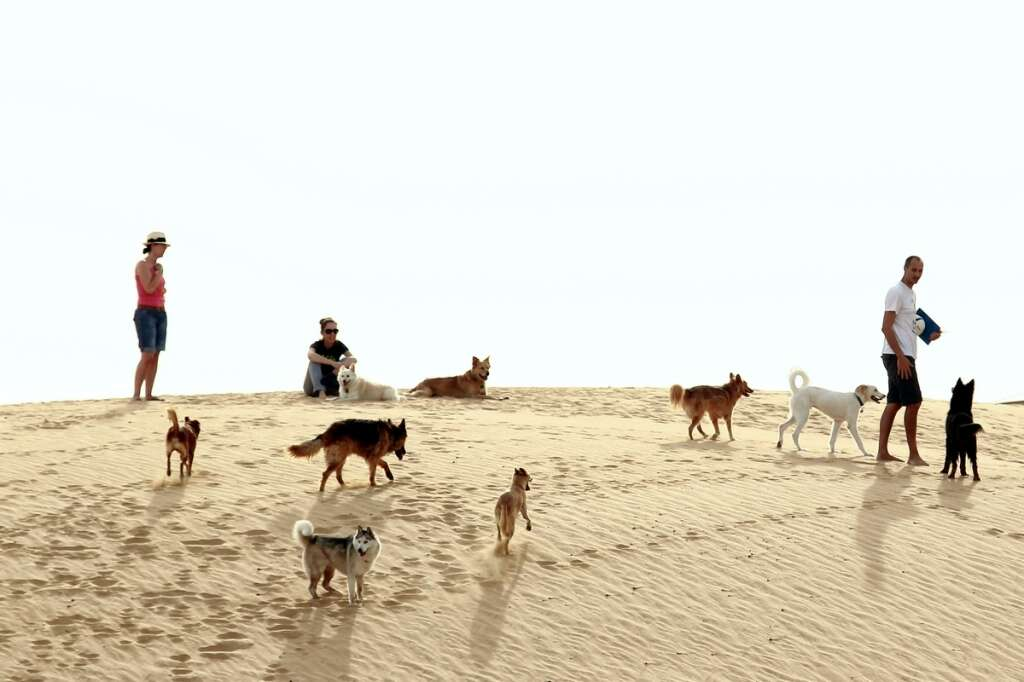 Dubai says pets allowed, but how welcome are they? - News