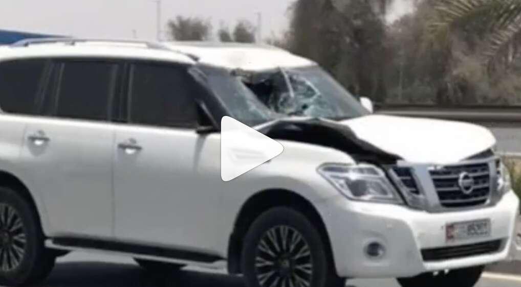 Camel dies in tragic UAE traffic collision