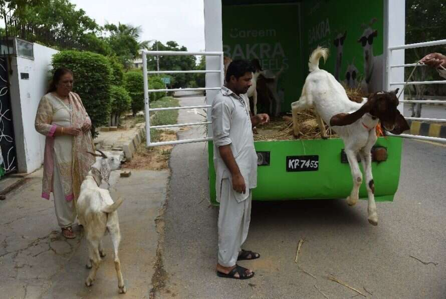 Need a sacrificial goat for Eid? Pakistan has an app for
