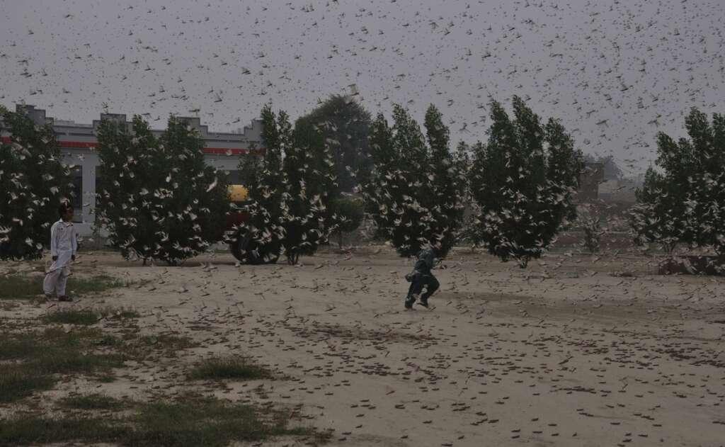 Pakistan, locusts, Imran