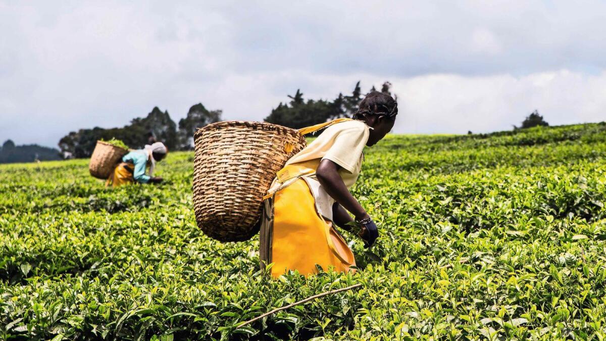 Profitable Agro-business