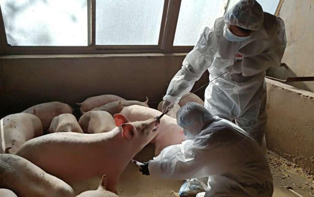 China, warns, new pandemic, flu virus
