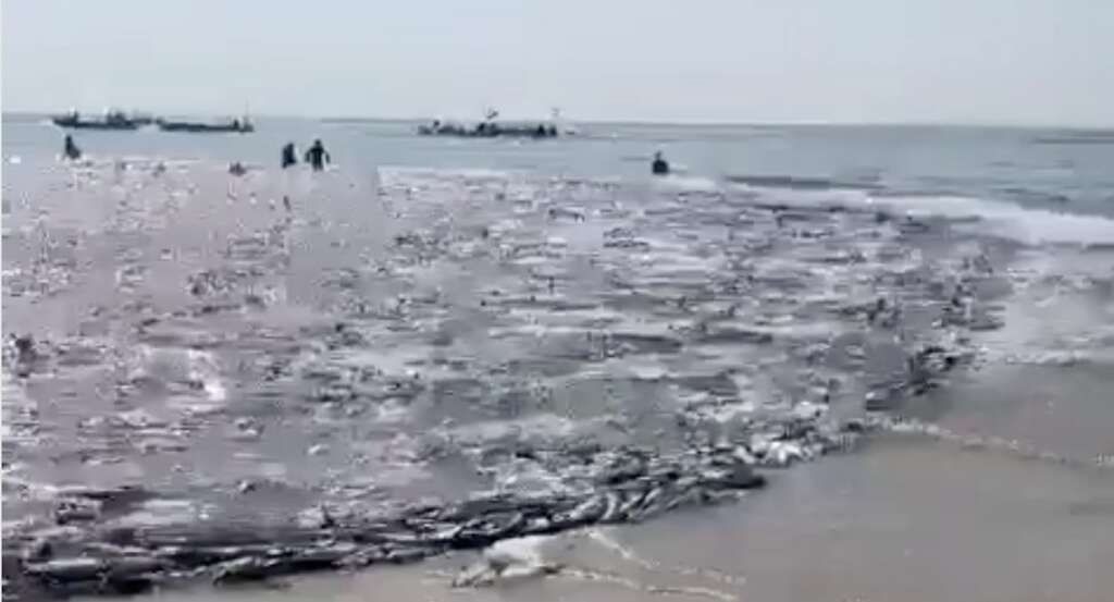fishermen, catch, 50 tonnes of fish, uae, 50 tonnes, record, diayouh