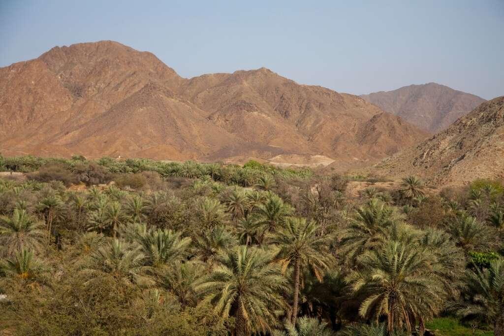 Sharjah, safari, Al Dhaid, Sheikh Dr Sultan bin Muhammad Al Qasimi