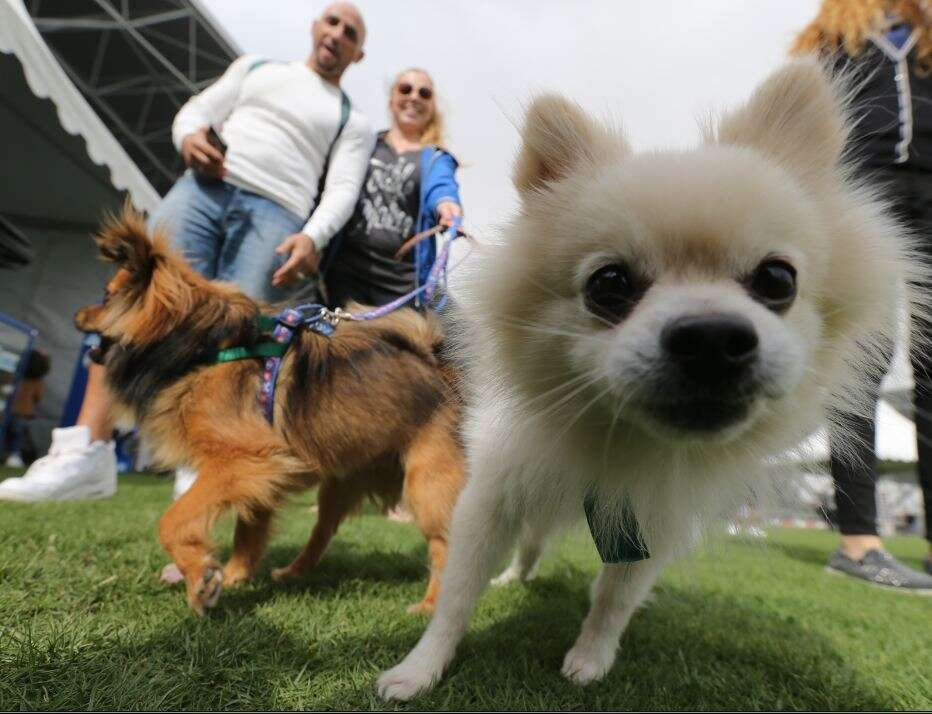 Dog owners call for more walking areas in Abu Dhabi
