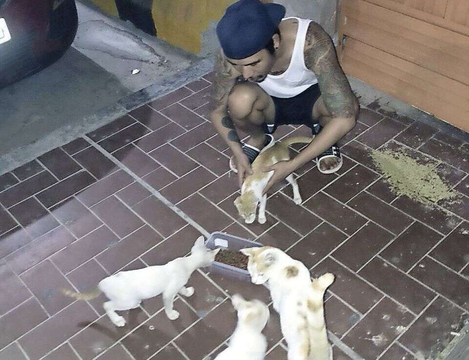 Unemployed UAE resident goes extra mile to feed street cats daily