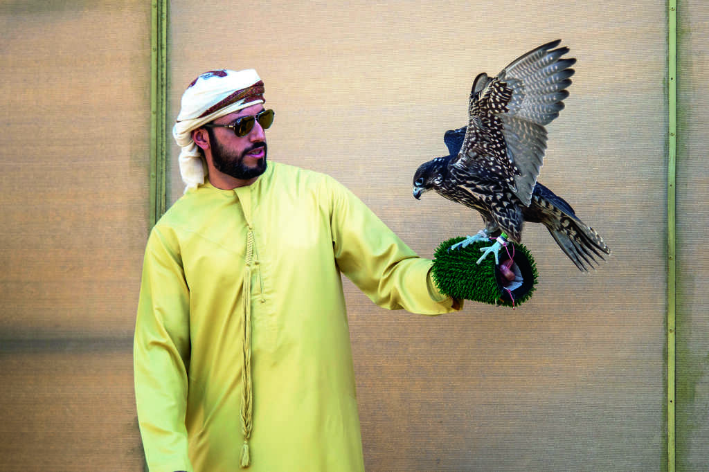 Uae S Falcon Breeders On Training Champions News