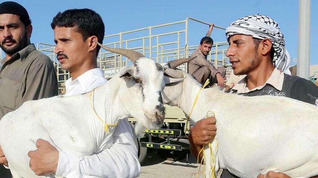 RAK imports extra animals to meet high Eid demand