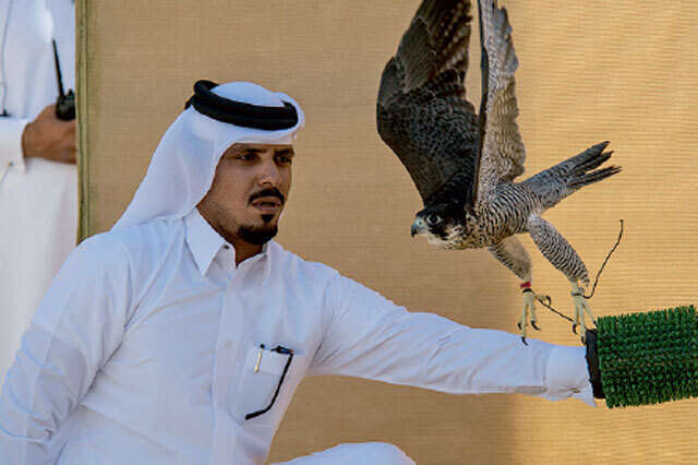 A look at the traditional Emirati pastime of falconry