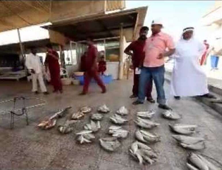 Scorching temperature blamed for high fish price in UAE