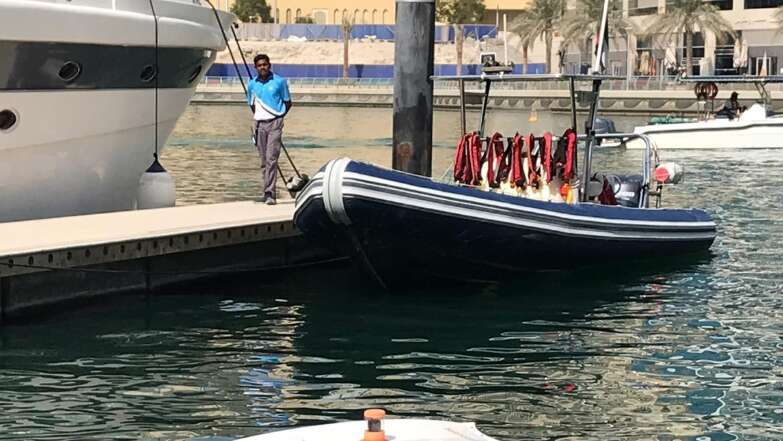 Shark in Dubai Marina that preys on waste
