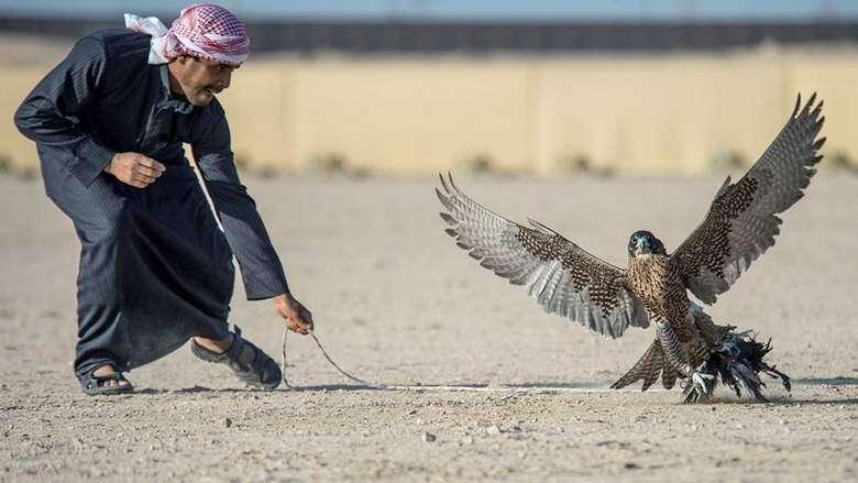 Dubai falconer modifies drones to give preys eye view