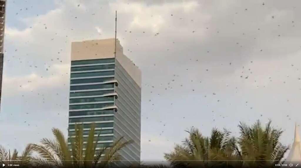 Strong wind, brings, locust swarms, Dubai, Abu Dhabi