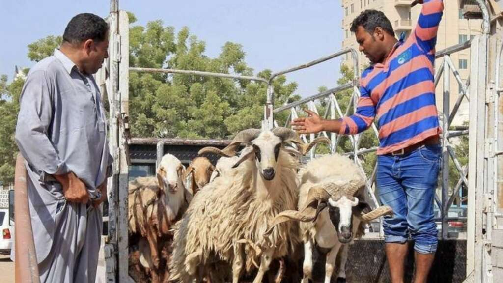 Livestock prices likely to drop by 35% in RAK around Eid Al