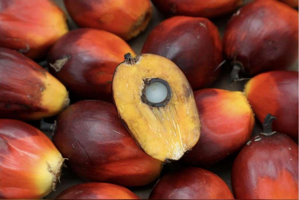 Malaysia, palm oil, new slogan