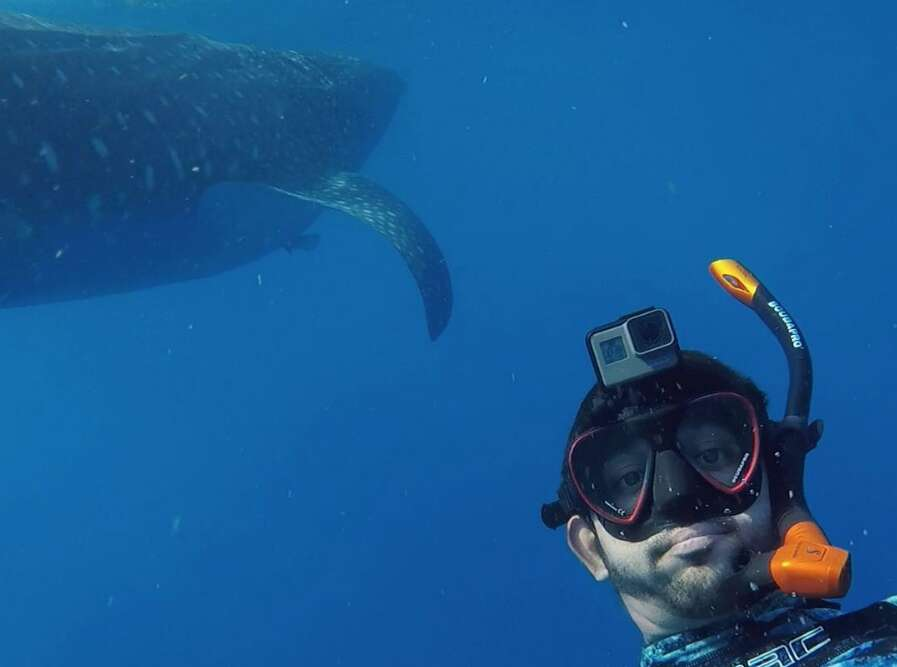 Video: Dubais Sheikh Hamdan swims with whale sharks