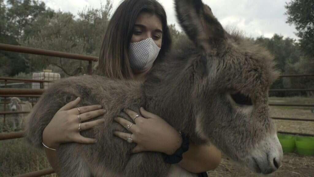 Spain, donkey, therapy