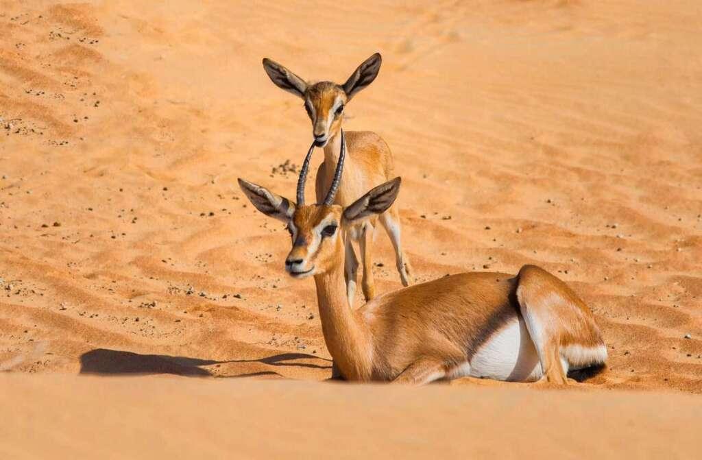 Man, challenges, 2-month, jail term, hunting, gazelle, UAE, nature reserve