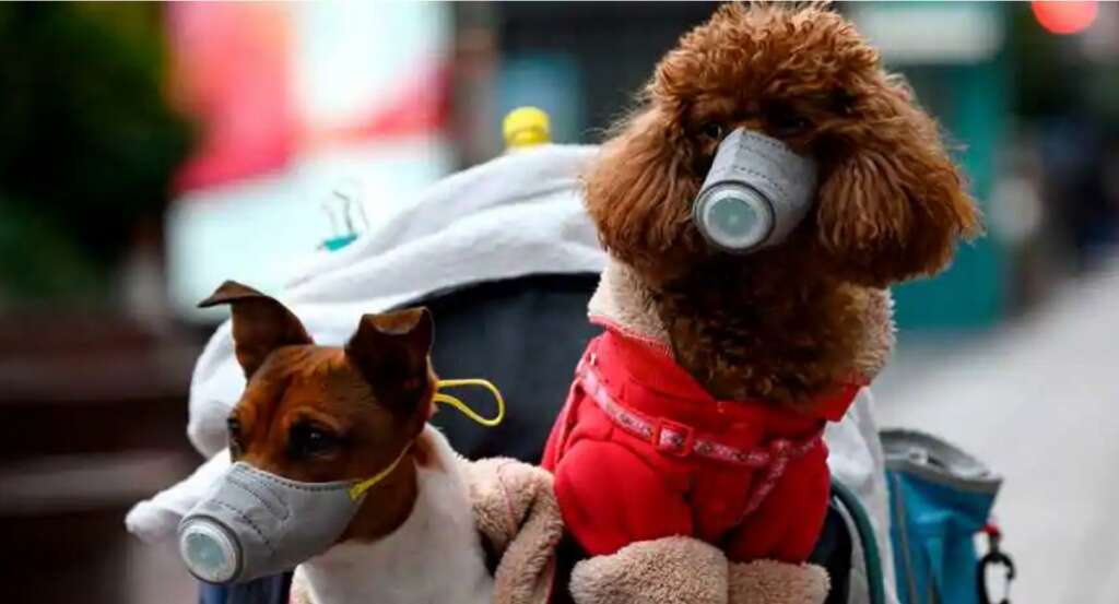 First dog to test positive, coronavirus
