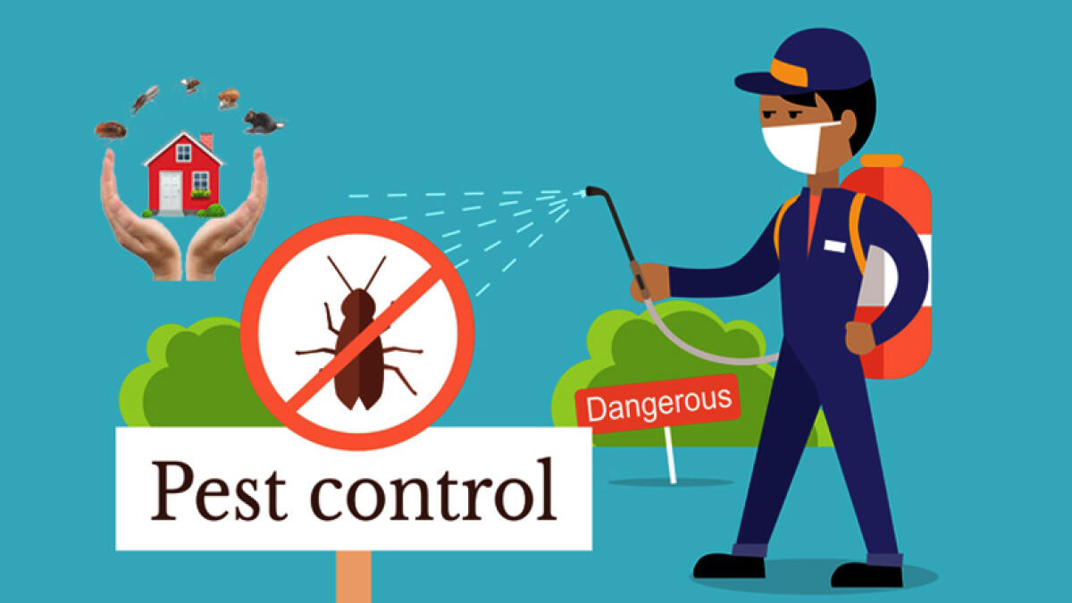 Pest control in Dubai: Things you need to know