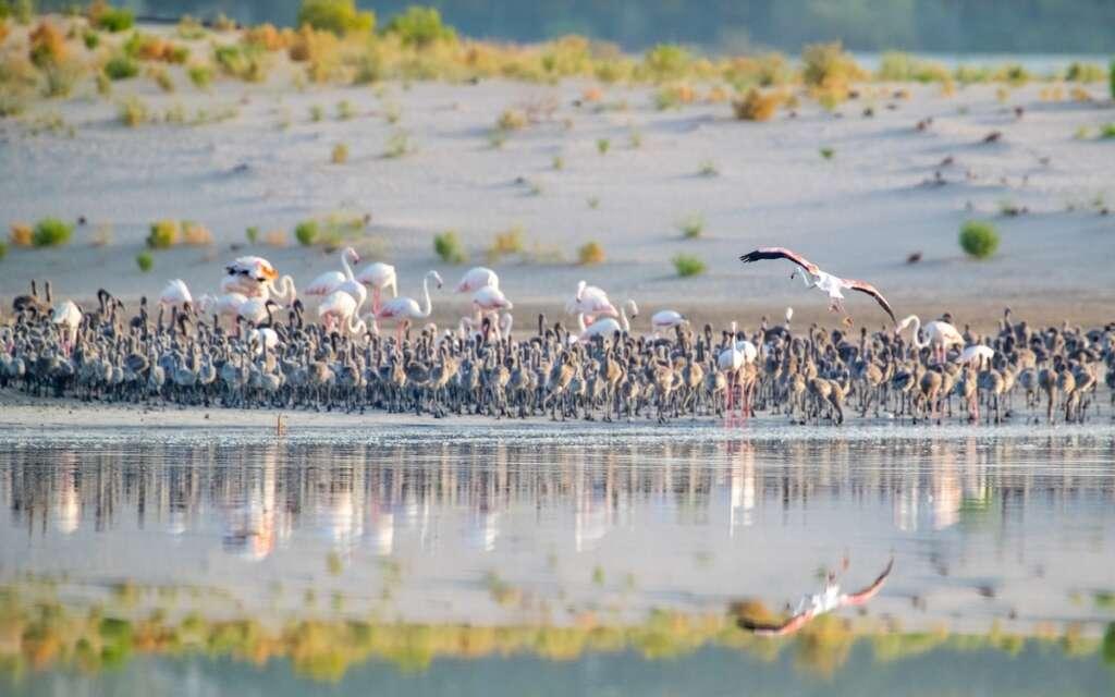 nature, travel, abu dhabi, uae, flamingo, al wathba, world travel awards, responsible tourism