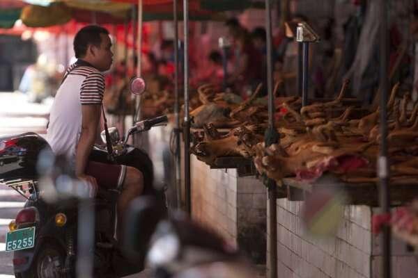 Yulin dog meat festival draws crowds despite controversy