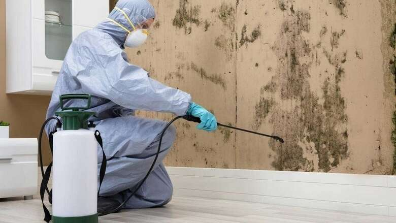 How residents can control pests in a safe way in UAE