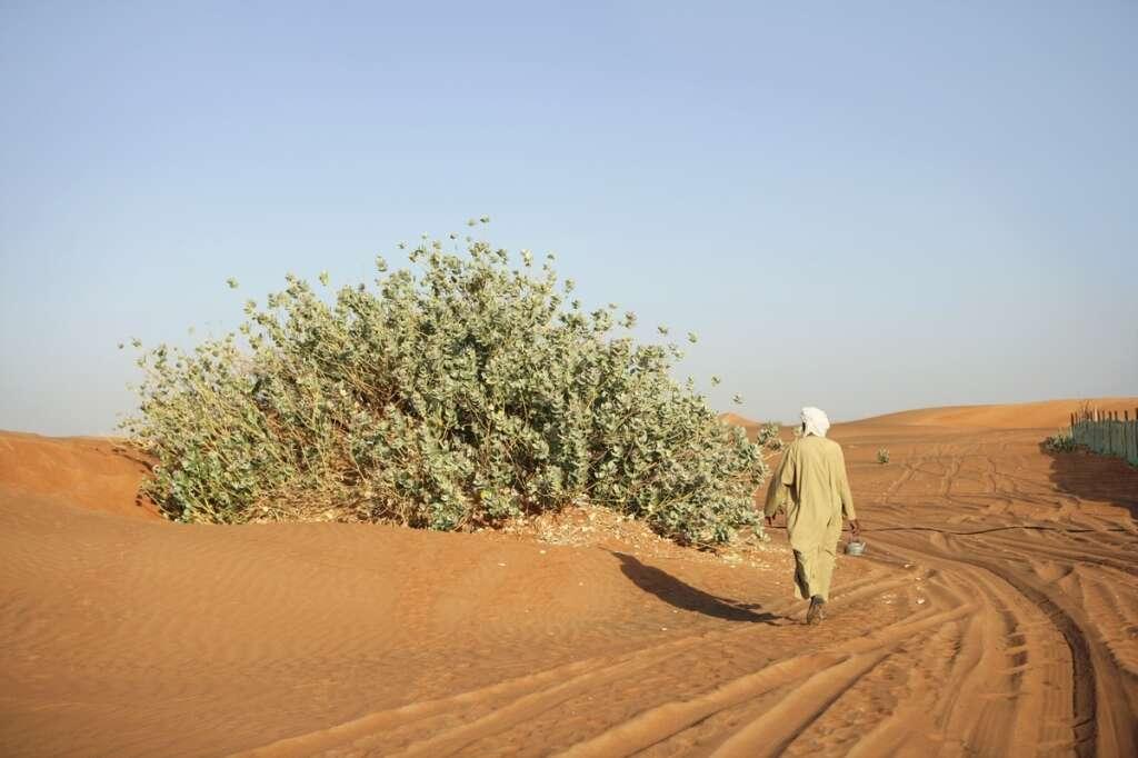 Health plant: UAEU team finds new use for desert flora