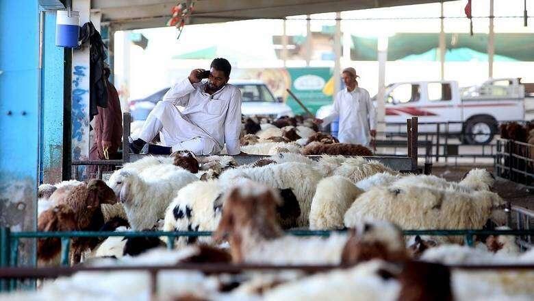 app, Eid Al Adha, sacrifice, meat, home-delivered, Dubai