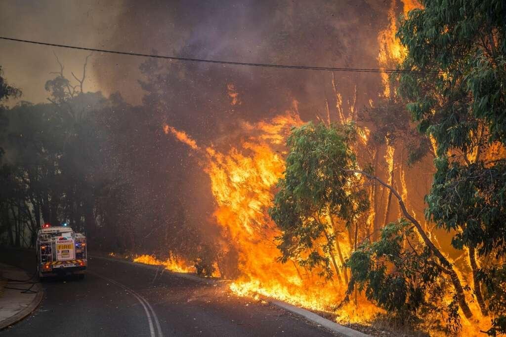 Australia, bushfires, animals