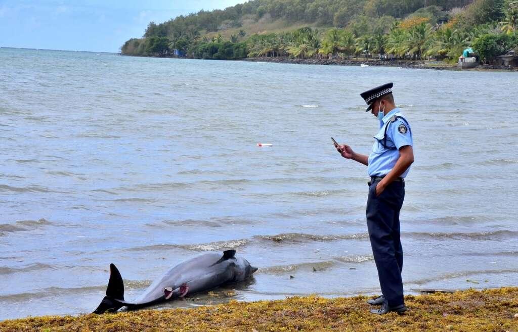 Mauritius, baby dolphin, lagoon