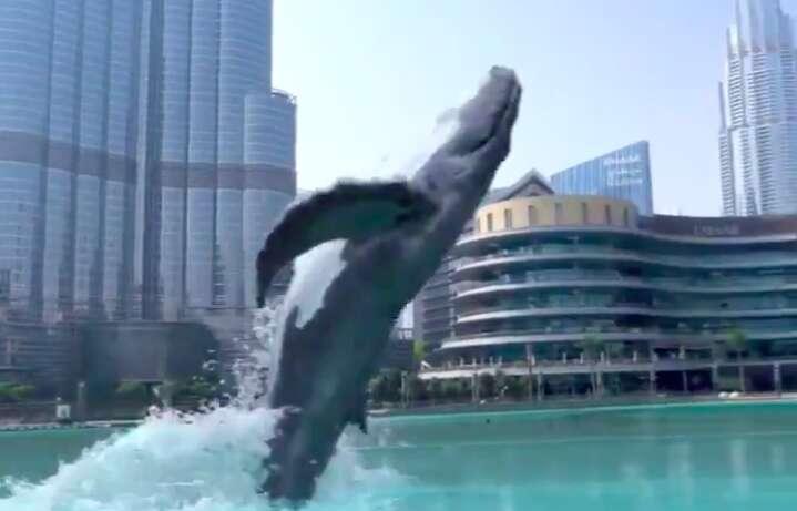 whale, Emaar, social media, twitter, instagram, dubai mall, fountain