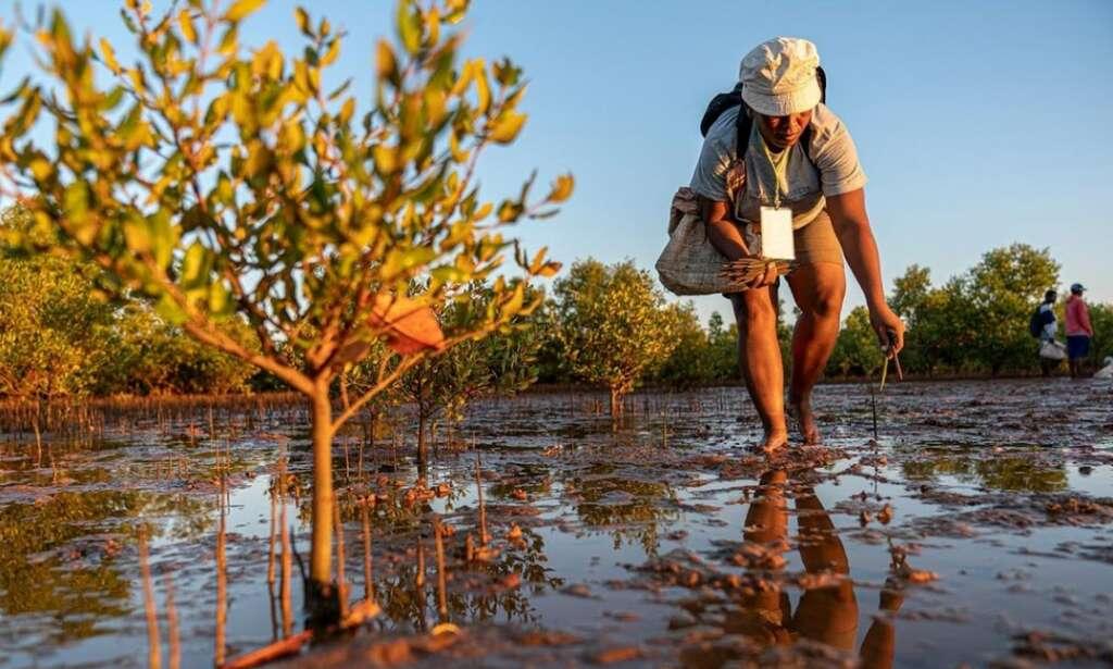 UAE global tree planting drive,  coronavirus curfews and lockdowns, lockdown