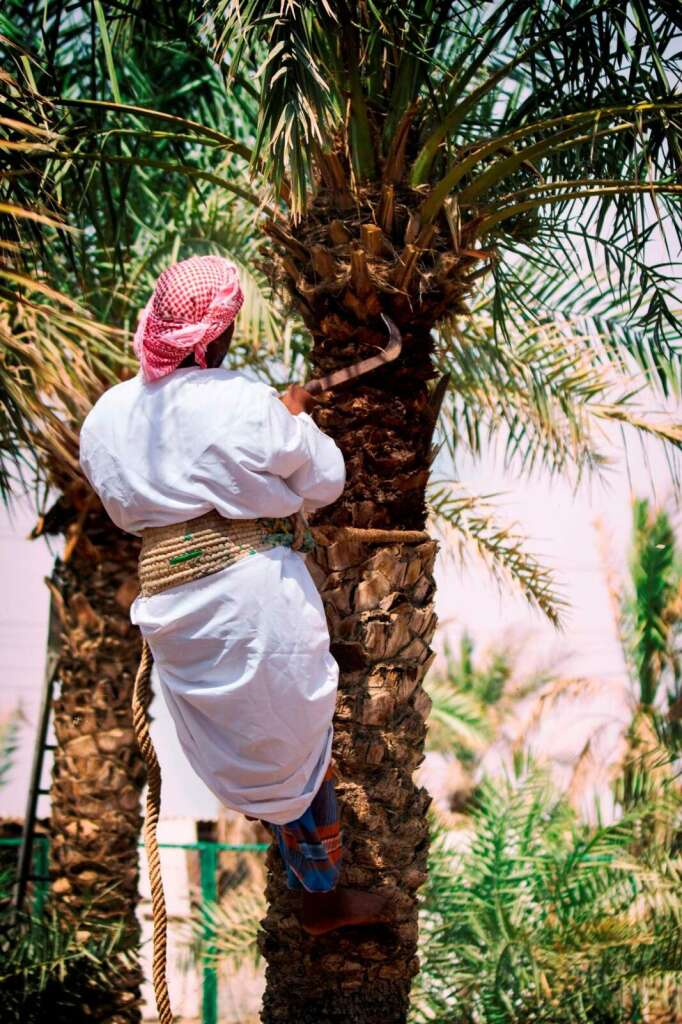 Goodbye to insects that attack date palms - News   Khaleej Times